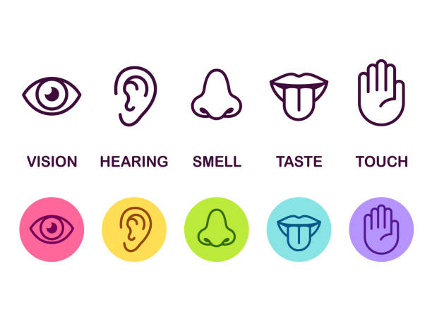 Senses icon set Icon set of five human senses: vision (eye), smell (nose), hearing (ear), touch (hand), taste (mouth with tongue). Simple line icons and color circles, vector illustration. sensory perception stock illustrations