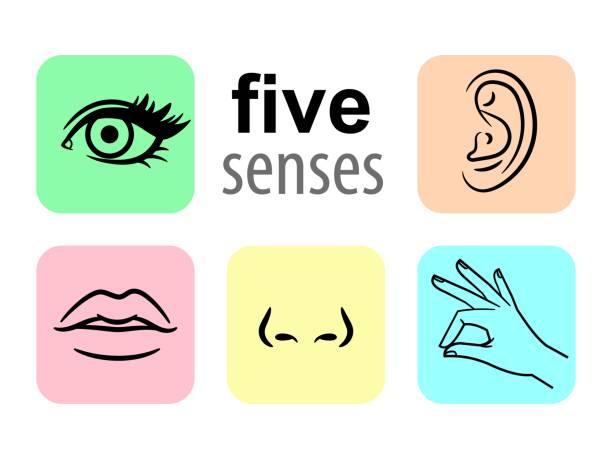 sinne-symbole. fünf menschlichen sinne illustrative vektor illustration, geschmack und geruch oder nase sehenswürdigkeiten - farbwahrnehmung stock-grafiken, -clipart, -cartoons und -symbole