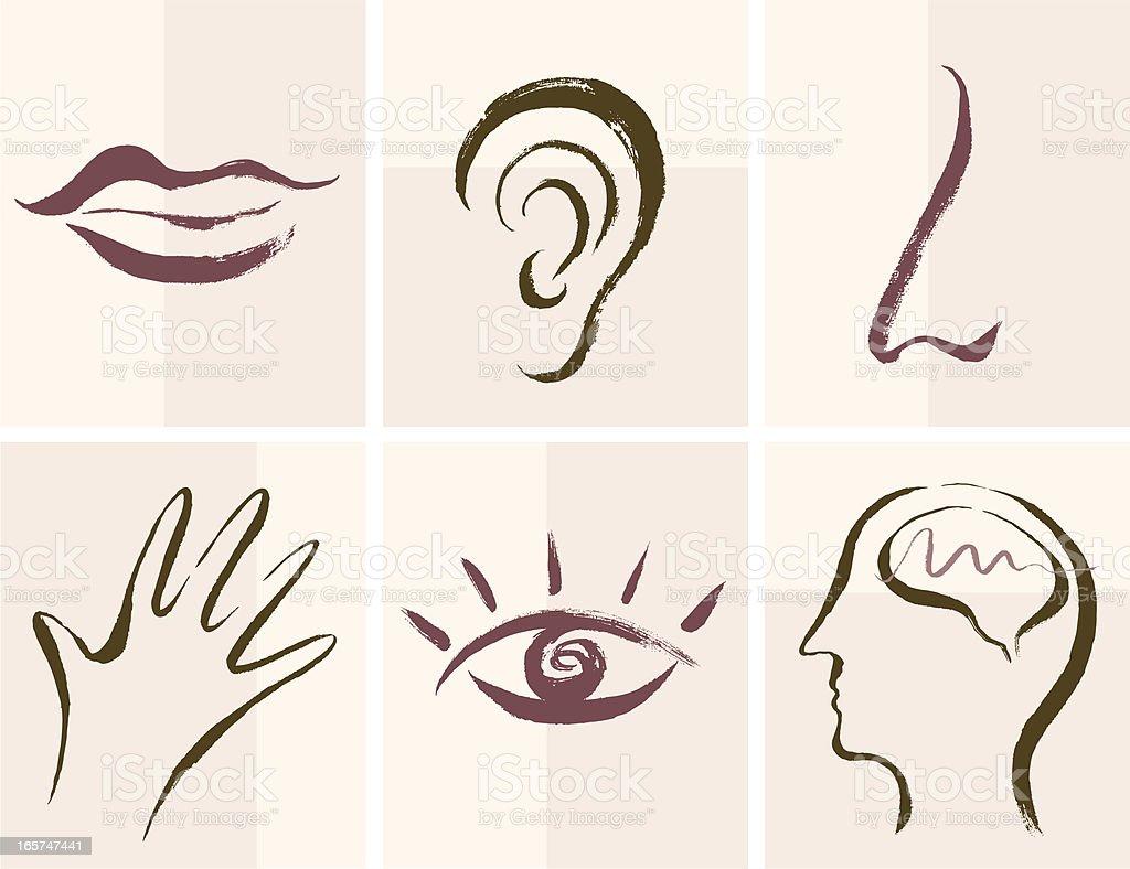 Senses Icons royalty-free stock vector art
