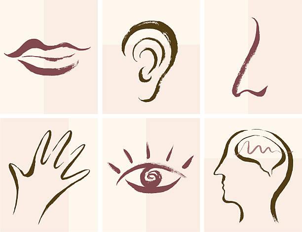Senses Icons vector art illustration