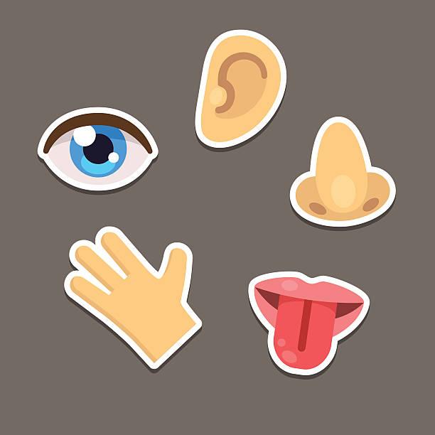 illustrazioni stock, clip art, cartoni animati e icone di tendenza di sensi delle icone - lingua umana