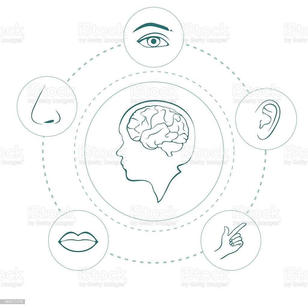 senses vector art illustration