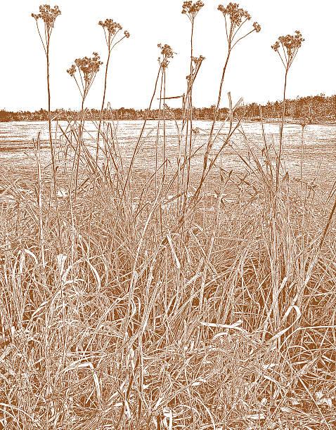 Royalty Free Beach Grass Clip Art, Vector Images ...