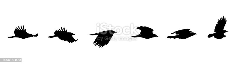 Silhouette Sequential series vector of crow flying on white background