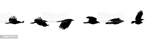 Sequential series vector of crow flying on white background vector id1096182870?b=1&k=6&m=1096182870&s=612x612&h=oxcjfu jeut1m0e1ipmeia3qykfur dwaz9ma6434gi=