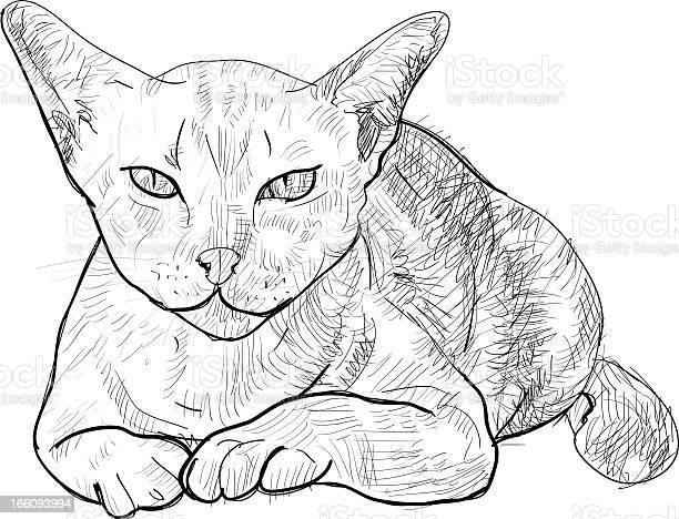 Serious cat vector id166093994?b=1&k=6&m=166093994&s=612x612&h=ao1anem8hq23lszd0jzvl0ljryvxjsgslb0ltvr2w20=