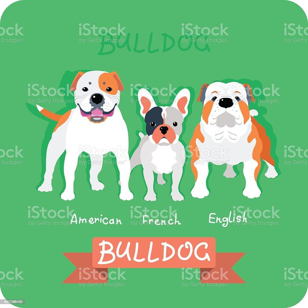 Set 3 bulldogs flat design vector art illustration