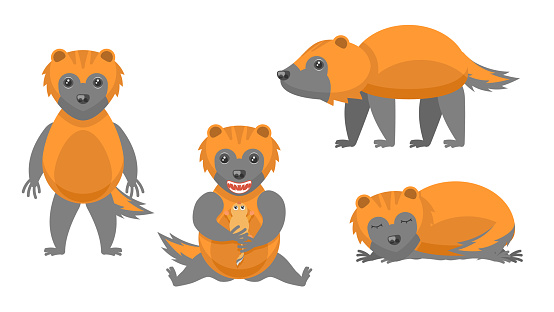 Set Abstract Collection Flat Cartoon  Different Animal Wolverines Stand, Eating A Rodent, Sleep Vector Design Style Elements Fauna Wildlife