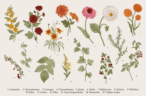 設定。秋の花と小枝。 - 花点のイラスト素材/クリップアート素材/マンガ素材/アイコン素材