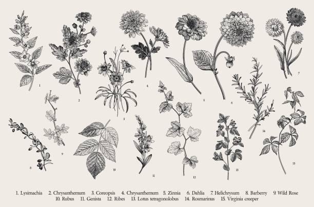 ilustrações, clipart, desenhos animados e ícones de definir. flores e galhos de outono. - saudade