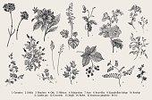 Vintage vector botanical illustration. Set. Autumn flowers. Black and white