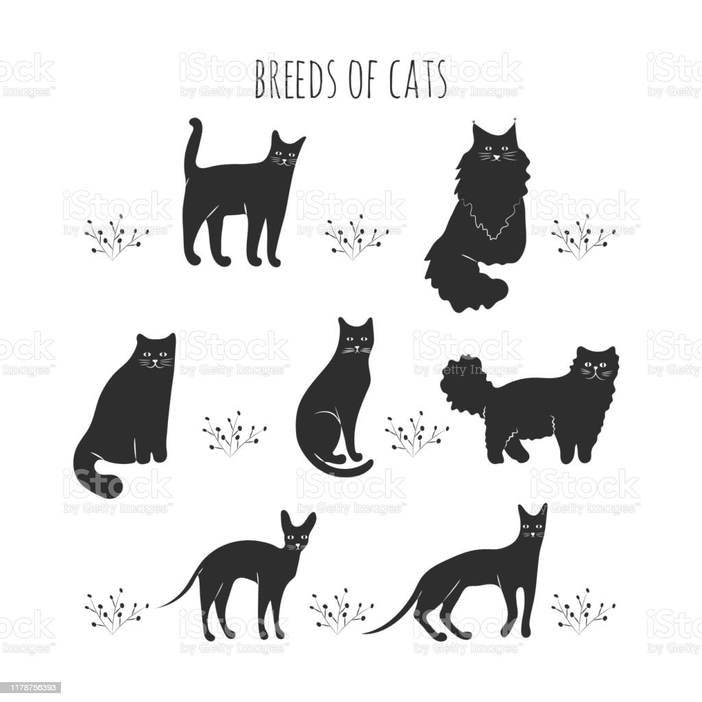 Set Black Icons Of Cat Breeds Stock Illustration Download Image Now Istock