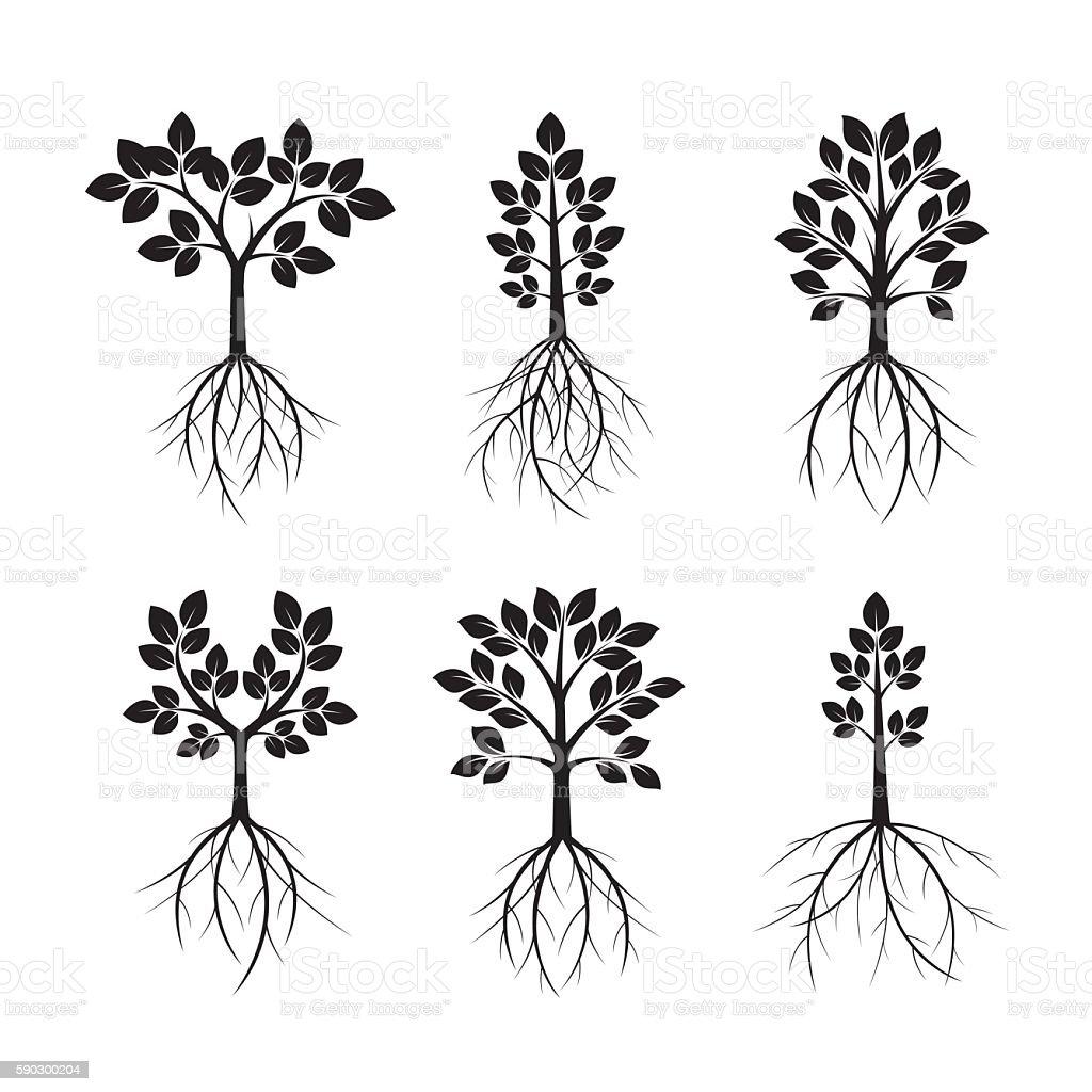 Набор черных деревьев и корни. Векторный рисунок. Набор черных деревьев и корни Векторный рисунок — стоковая векторная графика и другие изображения на тему Без людей Стоковая фотография