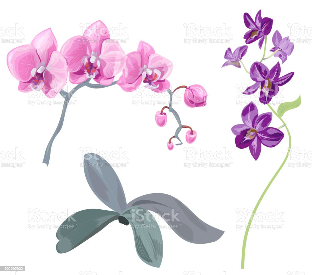 Set branches orchid pink purple flowers tropical plants green stem set branches orchid phalaenopsis dendrobium pink purple flowers tropical plants mightylinksfo