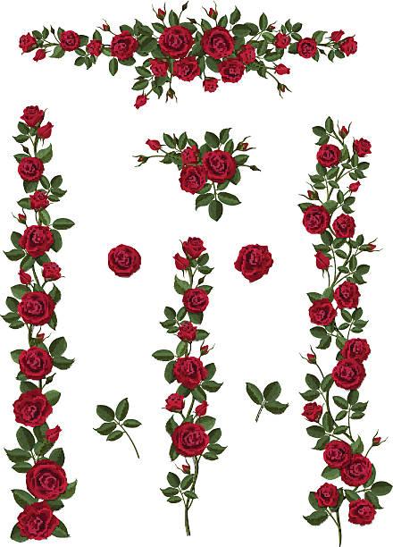 illustrazioni stock, clip art, cartoni animati e icone di tendenza di impostare di spazzole di fiori da rose rosse - rosa rossa