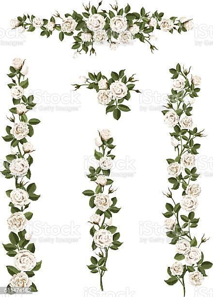 Set brushes flowers climbing white roses vector id511474162?b=1&k=6&m=511474162&s=612x612&h=n7fvqcpx24cnsgse9ppk29ctw2idbvoldyr0ggcg xi=