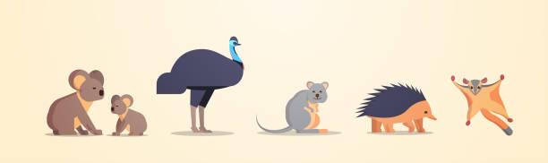 set cartoon gefährdet wilde australische tiere sammlung tierarten fauna konzept flach horizontal - megabat stock-grafiken, -clipart, -cartoons und -symbole