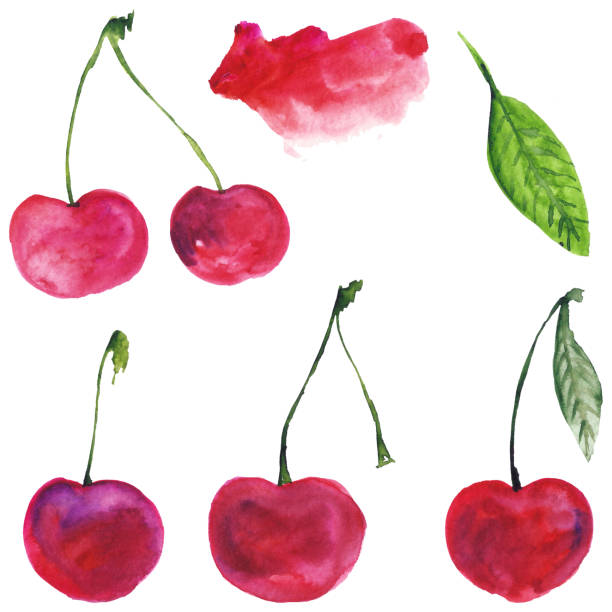 Set cherry. Watercolor illustration. Food. Isolated. Natural, organic. Fruit, berry. Burgundy, red, pink, green. Watercolor illustration, cherry cherry stock illustrations