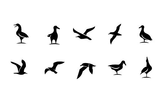 set collection seagull bird silhouette black white logo icon design isolated background
