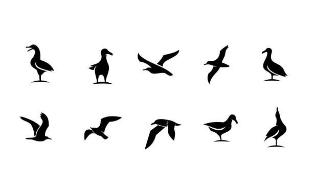 set collection seagull bird silhouette black logo icon design set collection seagull bird silhouette black white logo icon design isolated background animal limb stock illustrations