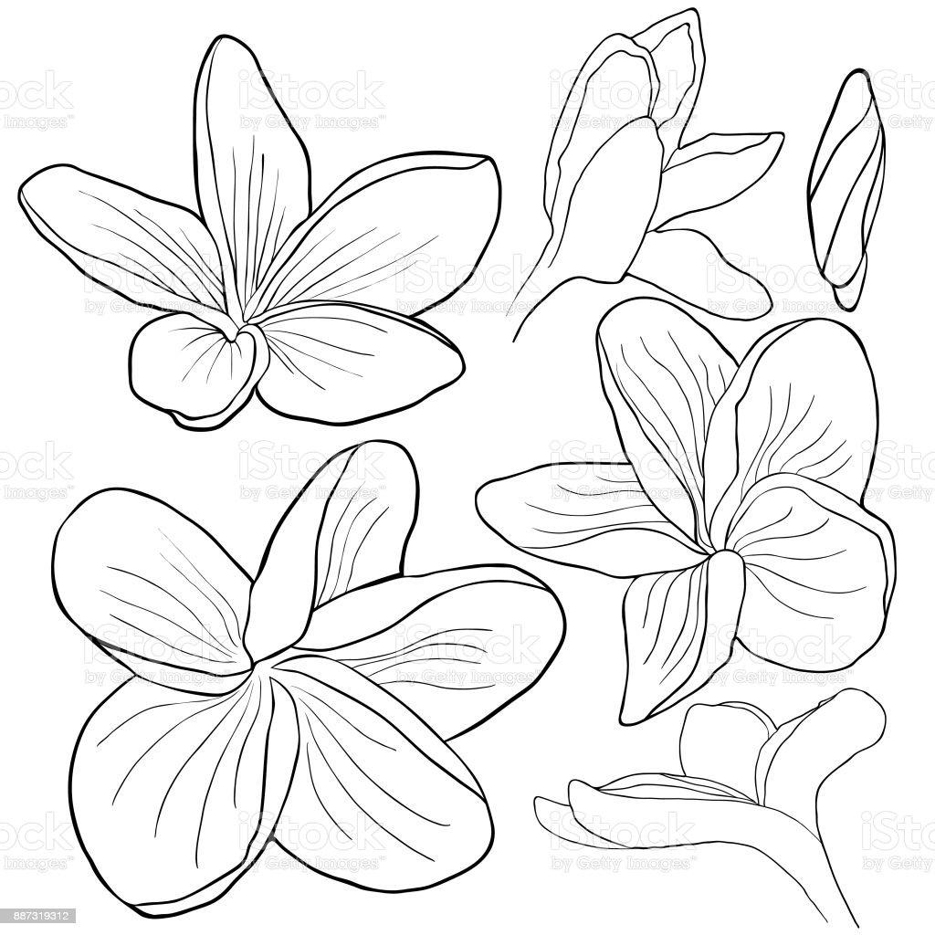 Ilustración de Set Para Colorear Flor Del Plumeria Hawaiano Exótica ...
