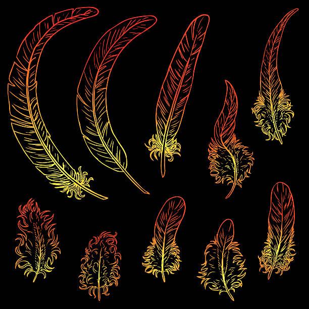 Bекторная иллюстрация Set contour feathers fiery rooster