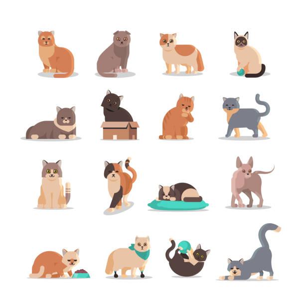 stockillustraties, clipart, cartoons en iconen met stel leuke katten in verschillende poses pluizige schattige cartoon dieren binnenlandse kitty huis huisdieren concept platte volledige lengte - miauwen