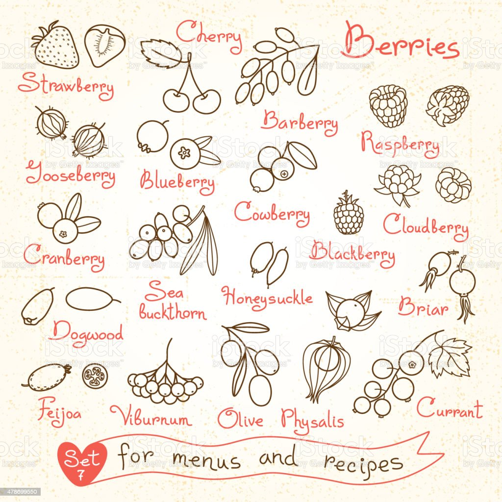 Set drawings of berries for design menus, recipes and packages vector art illustration