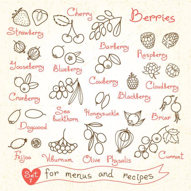 Set drawings of berries for design menus, recipes and packages Set drawings of berries for design menus, recipes and packages product. Vector Illustration. honeysuckle stock illustrations