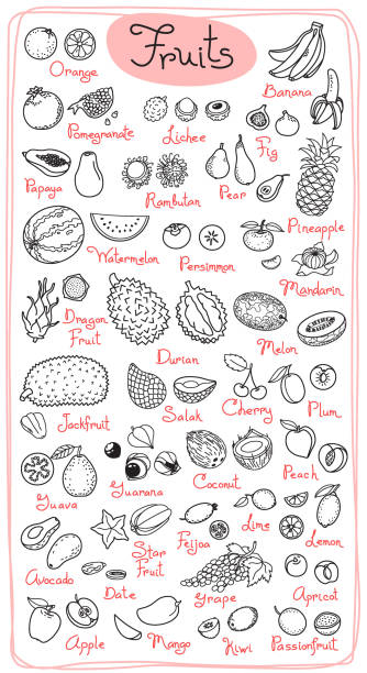 Set drawings of fruits for design menus, recipes and packages product. Vector Illustration Set drawings of fruits for design menus, recipes and packages product. Vector Illustration. avocado drawings stock illustrations