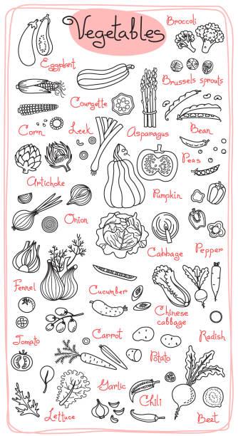 Set drawings of vegetables for design menus, recipes and packages product Set drawings of vegetables for design menus, recipes and packages product. Vector Illustration. asparagus stock illustrations