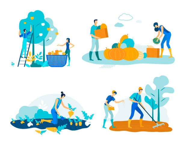 Set Farm Work Harvesting Vector Illustration. Set Farm Work Harvesting Vector Illustration. People Harvest Apples and Pumpkins in Baskets and Crates. Woman Collects Roots on Field. Pair Loosens Soil and Sows Seeds. Cartoon Flat. farmer stock illustrations