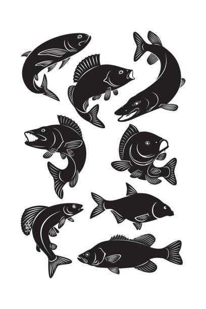 illustrazioni stock, clip art, cartoni animati e icone di tendenza di set fish - pesci