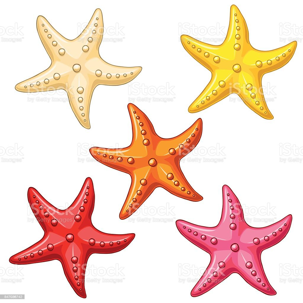 Set five color starfish on white vector art illustration