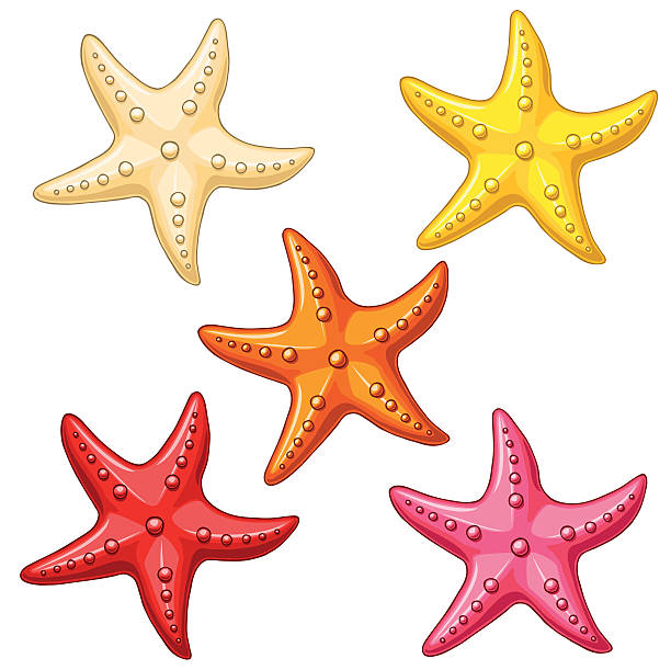 Bекторная иллюстрация Set five color starfish on white
