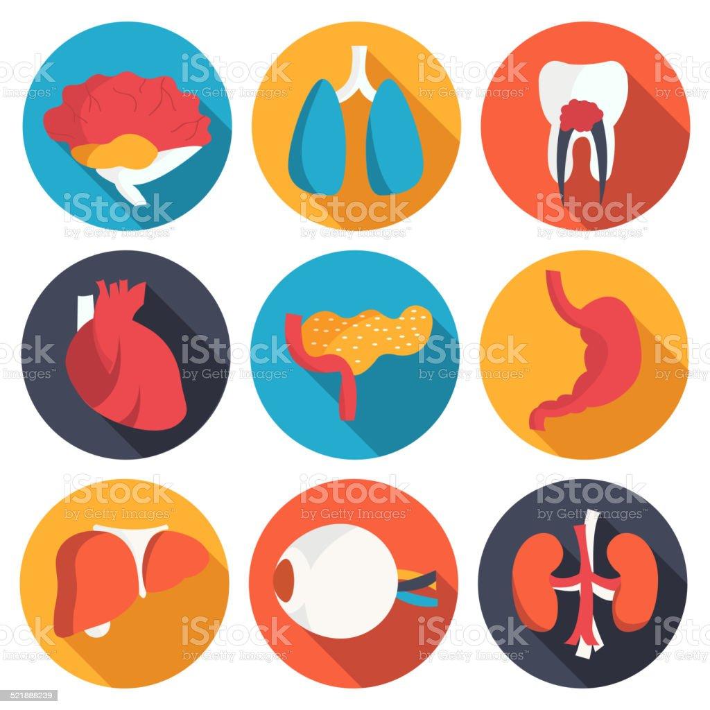 set flat human organs icons illustration concept. Vector background design vector art illustration