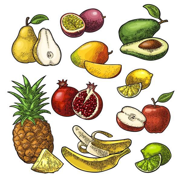illustrations, cliparts, dessins animés et icônes de mettre les fruits. ananas, citron vert, banane, grenade, maracuja, avocat. - fruit de la passion