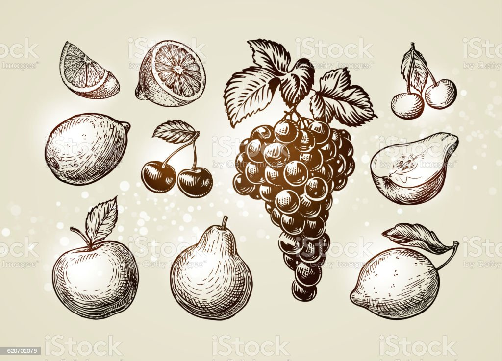 Set fruits sketch. Hand-drawn elements such as grape, lemon vector art illustration