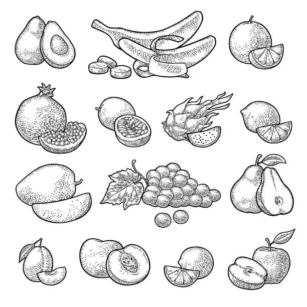 illustrations, cliparts, dessins animés et icônes de mettre les fruits. gravure vintage de couleur vector - fruit de la passion