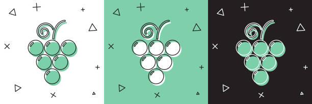 흰색과 녹색, 검은 색 배경에 고립 된 포도 과일 아이콘을 설정합니다. 벡터 일러스트레이션 - 잘 익은 stock illustrations