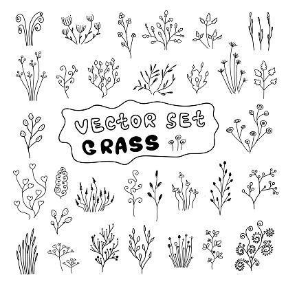 set grass in doodle style. plants, branches,leaves,sprouts.Vector illustration in doodle style on white background.Elements for greeting cards. simple doodles twigs,grass,herbs.Hand drawn set of herbs