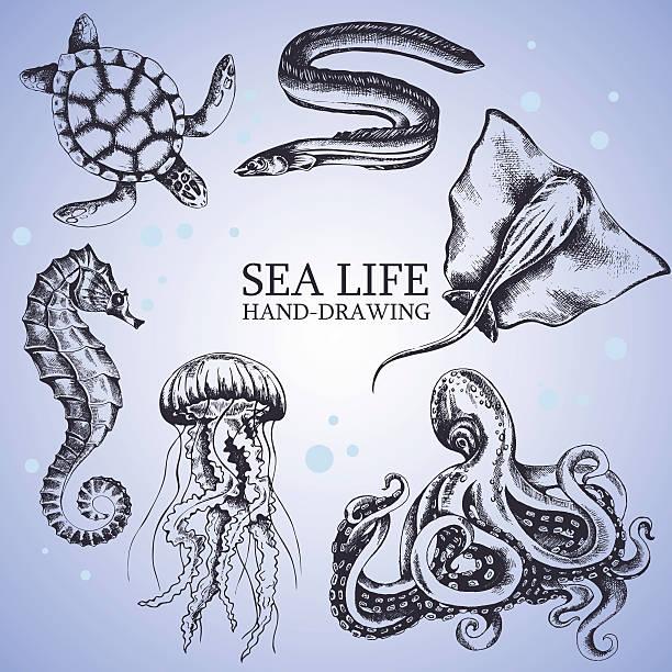 set handmade sketches set handmade sketches sea animals isolated on white background. Underwater life, stingray, octopus, seahorse, turtle, eel, jellyfish - Stock Vector sea horse stock illustrations