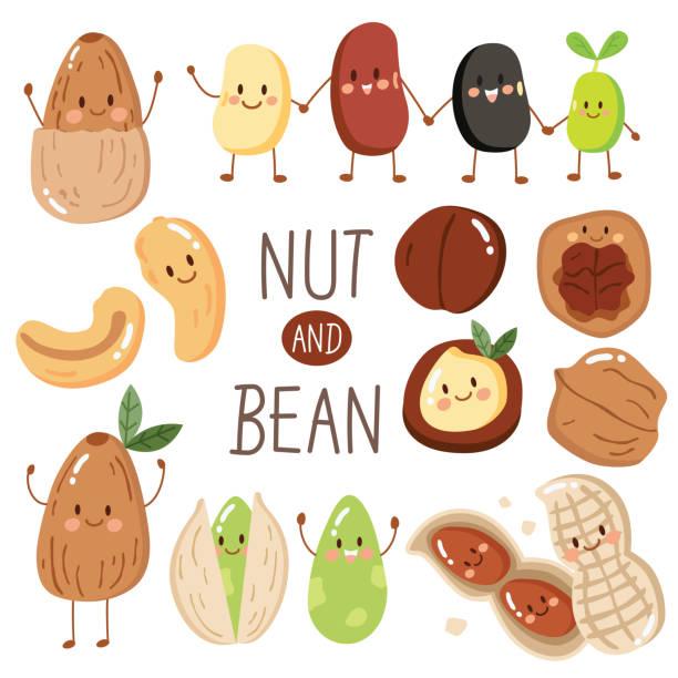 귀여운 견과류와 콩 아몬드, 땅콩, 씨앗, 피스타치오, 캐슈 넛, 팥, 검은 콩, 헤이즐넛 및 마 카 다미아를 설정 합니다. - nuts stock illustrations