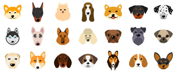 Set Heads of Dogs, Collection Different Breeds of Canines, Isolated on White Background – artystyczna grafika wektorowa