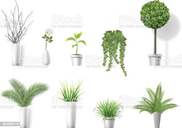 Set home plants vector id804358170?b=1&k=6&m=804358170&s=612x612&h=tmscohi6w0xkjpwk dqhb2gbwpz3 qrwlfpviqv4e8e=