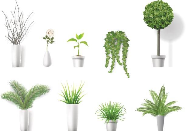 set home plants Set of vector realistic detailed house plant for interior design and decoration. potted plant stock illustrations