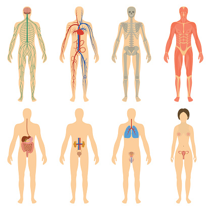 Set human organs and systems of the body vitality