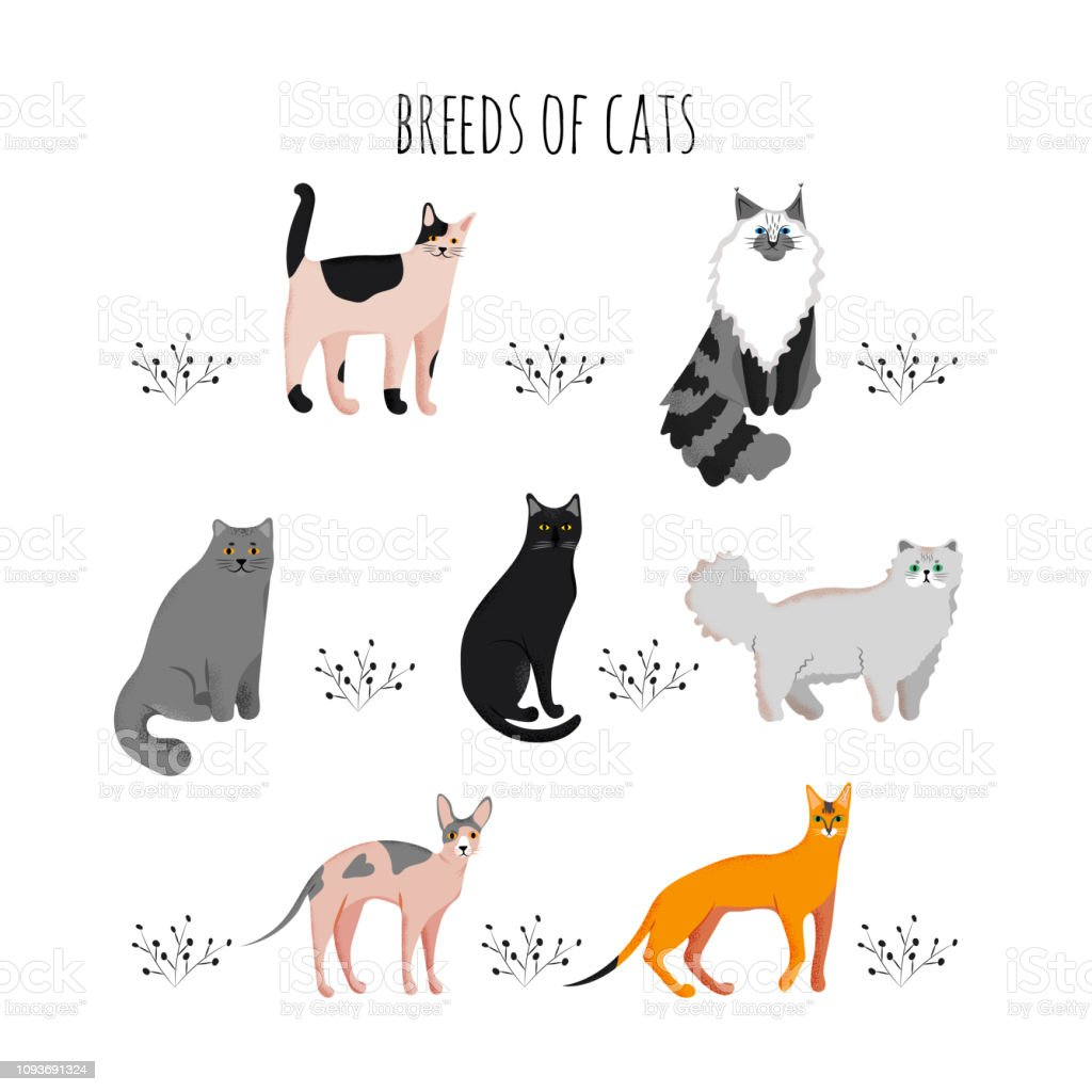 Vector illustration. Set icons cartoon style of cat breeds. Cute...