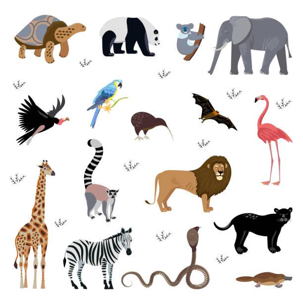 stellen sie icons cartoon-stil von verschiedenen tieren. zeichen für anderes design. - megabat stock-grafiken, -clipart, -cartoons und -symbole