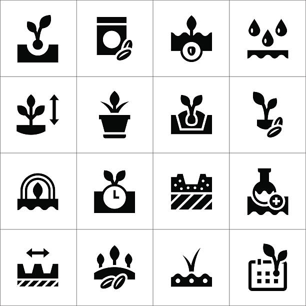 Set icons of seed and seedling vector art illustration